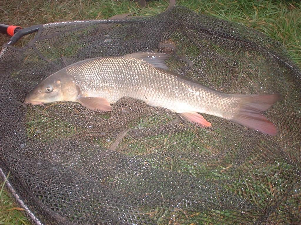 Rising rivers! 014 - Fishing for Barbel
